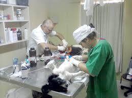 Argentina. Guards needed 24 hours. veterinary care weekdays, weekends and holidays. Petition · Necesitamos guardias de 24 hs. de atención veterinaria días de semana, los fines de semana y feriados. · Change.org