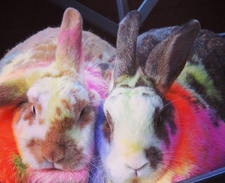 Rainbow bunnies at the crystal castle