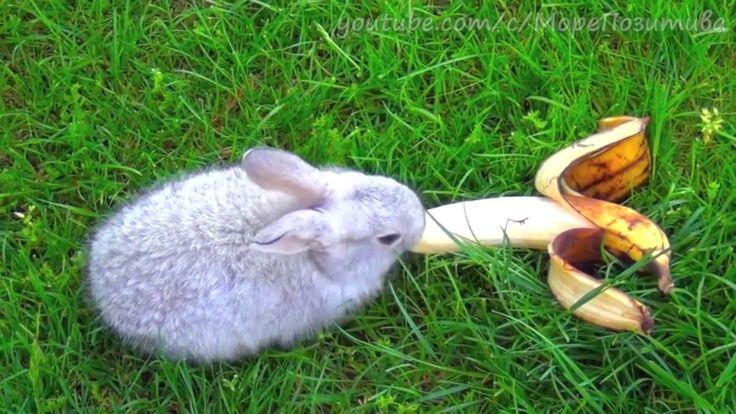 Кролик ест банан - Rabbit eating banana