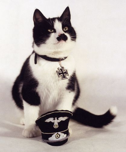 Adolf Kitler: Cats, Hitler Cat, Funny, Humor, Photo, Kitty, Adolf Kitler, Animal