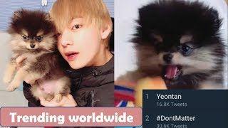 #Yeontan {Taehyungs puppy} is trending worldwide on twitter   BTS news