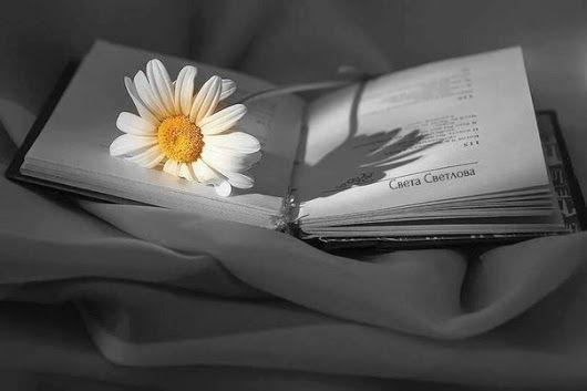 """Каждое утро — это новый чистый лист твоей жизни. И чтобы написать на нём что то хорошее, совсем не обязательно быть писателем.  Олег Рой. """"Герой её романа"""" - Inna Sh - Google+"""