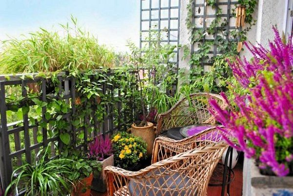 Create a small structure for support or buy a trellis for climbing plants. You…