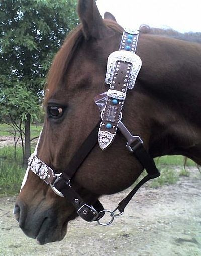 Normally don't like the belt style bridles but I kinda really like this!