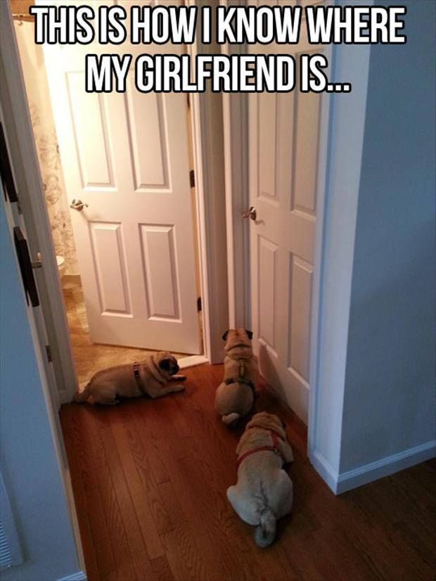 how funny.The Doors, Funny Pictures, Funny Stories, Pugs, Dogs Owners, Funny Photos, Baby Dogs, So Funny, Animal