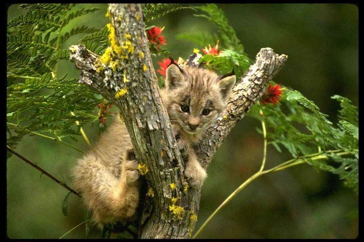 Stora katter - gratis skrivbordsbakgrund: http://wallpapic.se/djur/stora-katter/wallpaper-32316