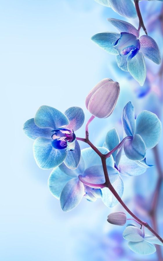 3d Orchid Wallpaper Iphone X Iphonewallpapers Pinterest