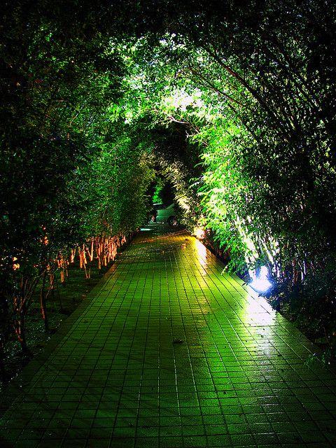 Mystic Bamboo Garden, Kuala Lumpur, Malaysia