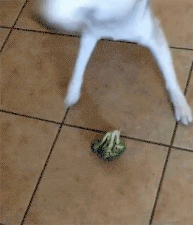 When dog encounter broccoli. http://ift.tt/2eVF23h