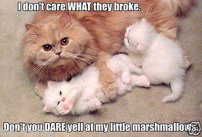"Funny Cute Cat Animal Photo Fridge Magnet 2 ""x3"" Collectibles – #a … – Kochen"