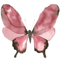 A butterfly by Lissa Thimm
