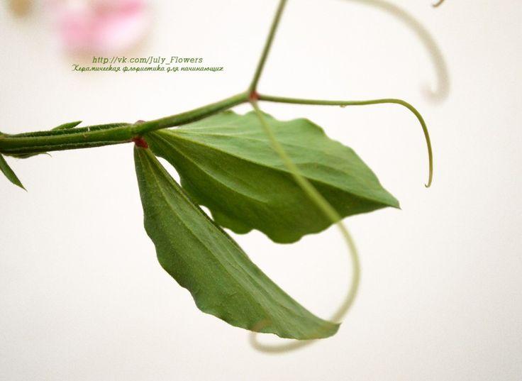Душистый горошек. Цветы для лепки – 15 фотографий