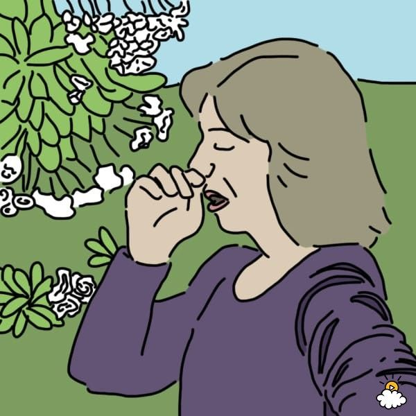 Spring allergies symptoms and remedies