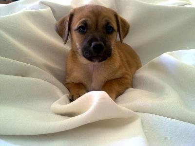Šťastný štěně JE klidné štěně. vychova v noci