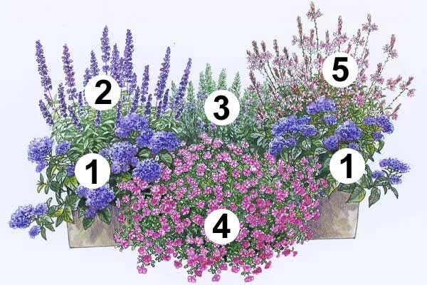 """1 Vanilleblume """"Nagano"""" (2 Stück), die üppige Blütenschirme bildet. Zum…   – Grün für drinnen & draußen"""