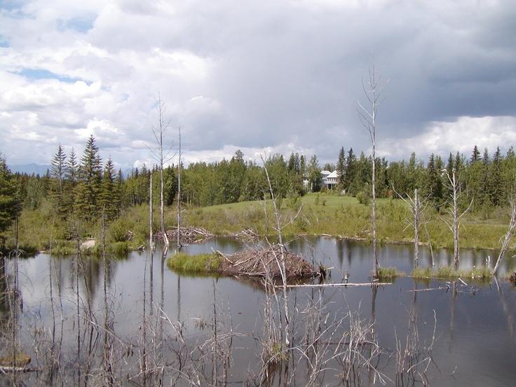 Hinton Alberta Boadwalk area