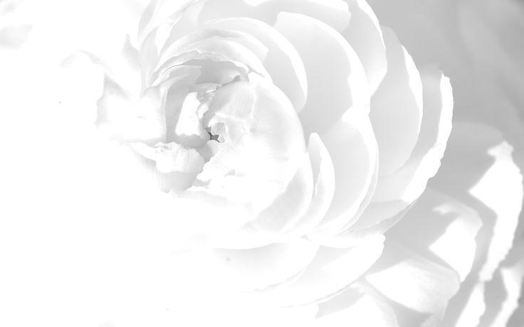 Flower Design Wallpaper Black And White White Background