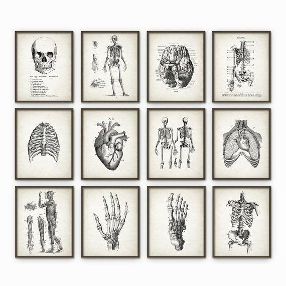 Anatomie humaine Antique Art Print Set de 12 - décoration Vintage anatomie - Antique livre plaque - étudiant en médecine cadeau idée photo ensemble de 12  Imprimé en utilisant des encres darchives de haute qualité sur papier darchivage poids lourd avec une finition mate et lisse. Un cadeau fantastique ou un fabuleux ajout à votre maison !  Sil vous plaît choisir entre différentes tailles.  ---------------------------------------------------------------------------------------------  Accueil…