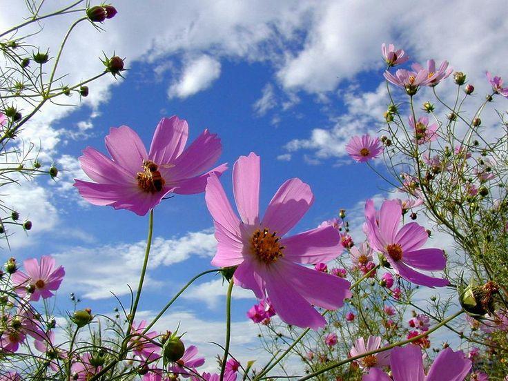 秋の桜といえば、コスモス! これから見頃の関東のコスモス畑3選!