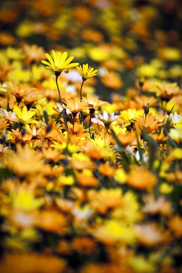 Yellow | Giallo | Jaune | Amarillo | Gul | Geel | Amarelo | イエロー | Kiiro | Colour | Texture | Style | Form | Pattern |
