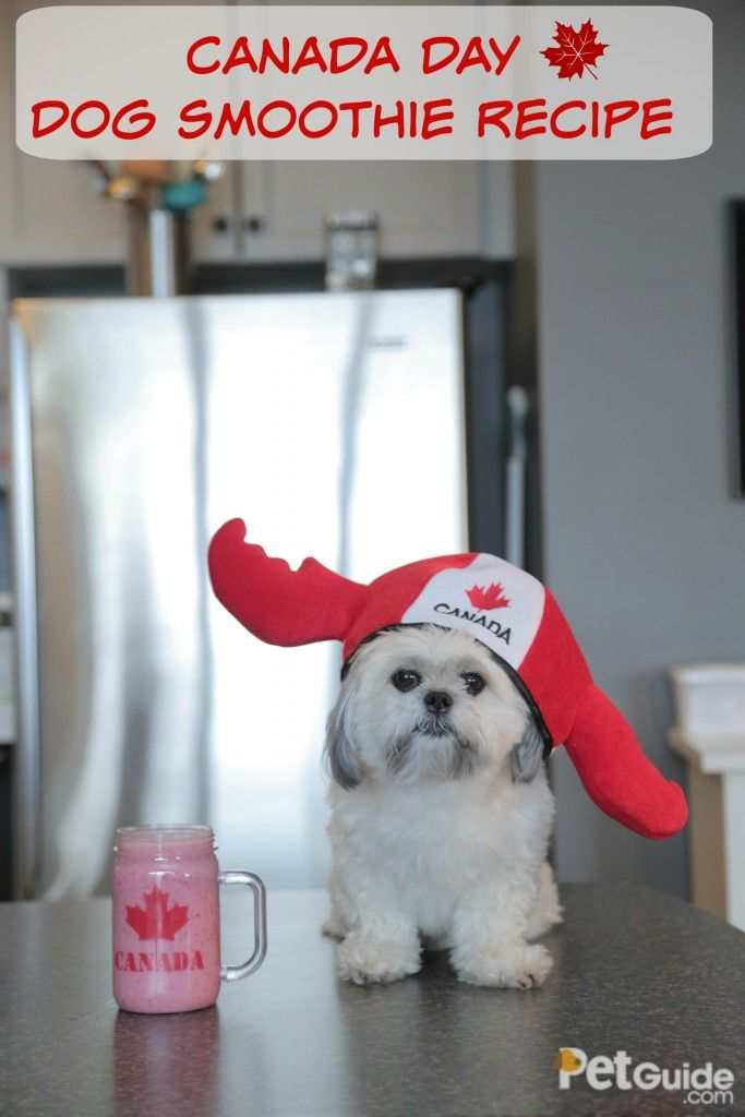 This Canada Day dog smoothie is better than hockey, a herd of moose, and a studdly prime minister with amazing hair!