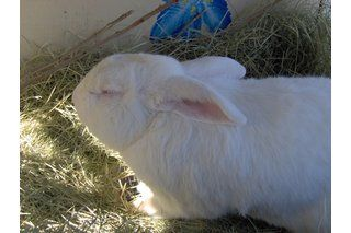 How to Keep Rabbits Warm in Winter With a Rabbit Hutch   eHow