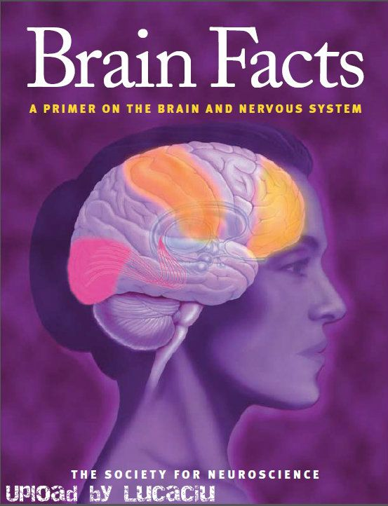 8925 best brain training for kids images on pinterest neuroscience brain facts a primer on the brain and nervous system the society for neuroscience fandeluxe Choice Image