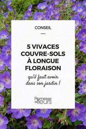 732 melhores imagens de plantes d co no pinterest jardinagem arbusto e arbustos - Plantes d int u00e9rieur faciles d entretien ...