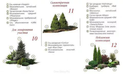 композиции с можжевельником фото схема: 6 тыс изображений найдено в Яндекс.Картинках
