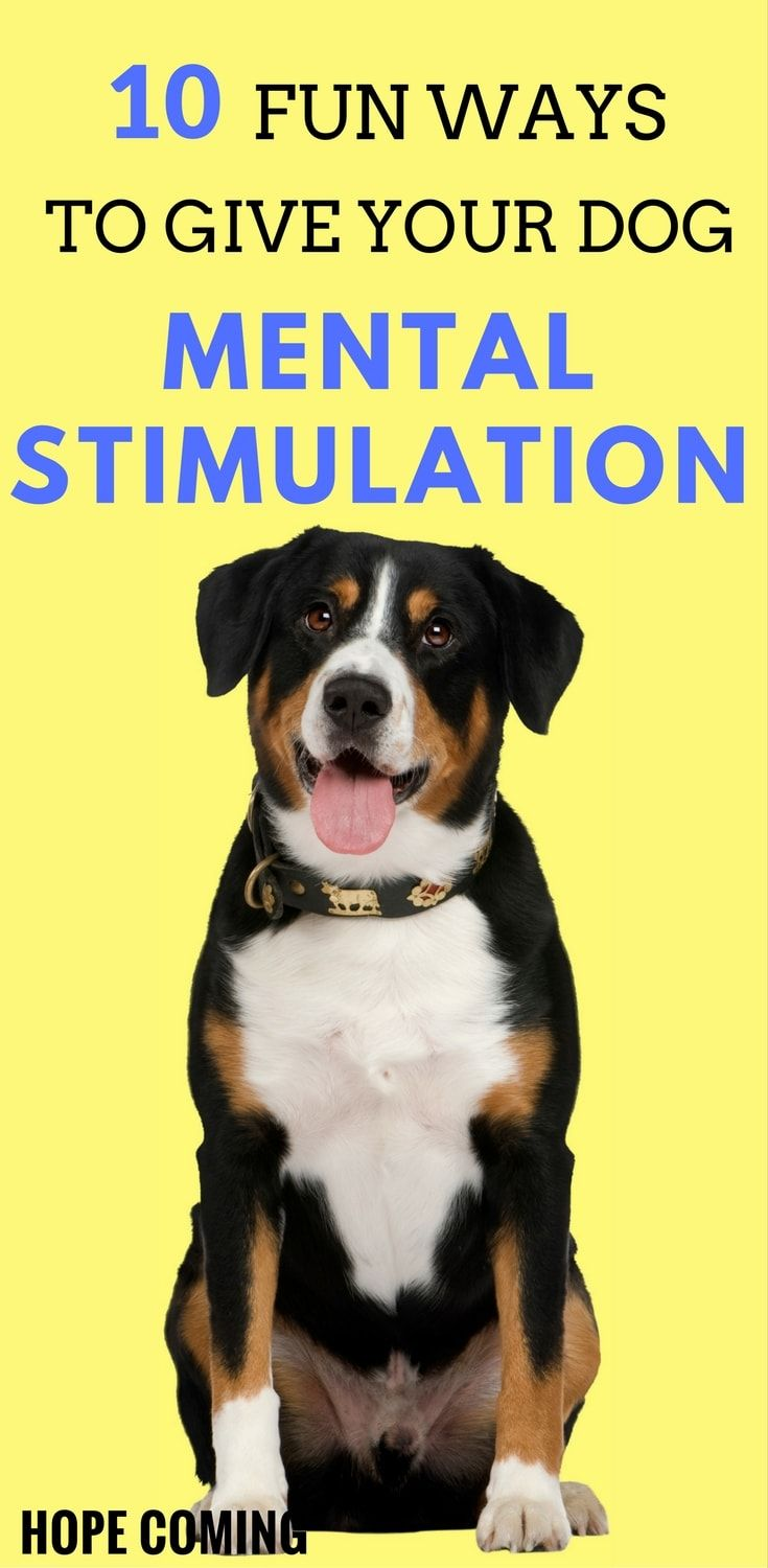 10 Fun Ways To Give Your Dog More Mental Stimulation Woof Woof