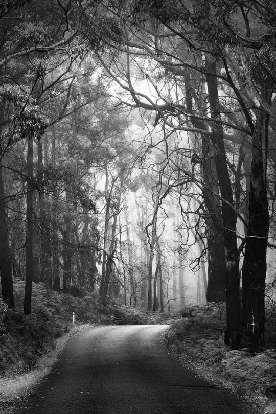 Monochrome Photography Black White Nature Railroad Tracks Beautiful Forest Dark Beauty N Forests