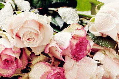 #Peonies, #Roses, #Pink