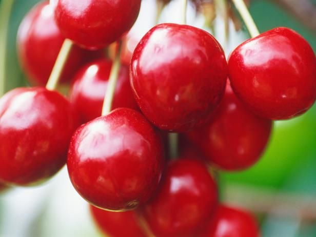 Cherries are one of my favorite fruits, but they have gotten expensive. So growing my own in containers seems like a great option. The best fruit trees for pots are dwarf varieties that produce full-sized fruit. Good cherries include 'Compact Stella' and 'Maynard Mini Stem'.