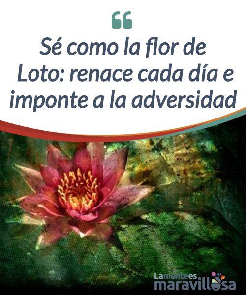 Sé como la flor de Loto: renace cada día e imponte a la adversidad La #naturaleza es tan #apasionante que nos da las respuestas más inesperadas cuando ni tan siquiera creíamos que podían existir más allá de nuestra mente, de nuestra #esperanza y de nuestro deseo por seguir adelante. # Psicología