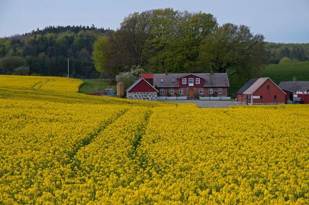 Gård på Österlen - Sweden