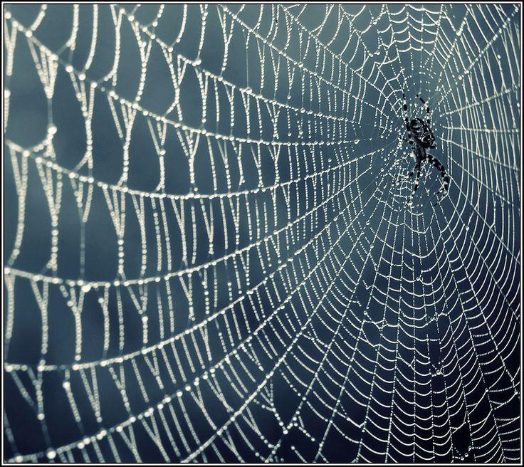 картинки весь мир в паутине просят возможности