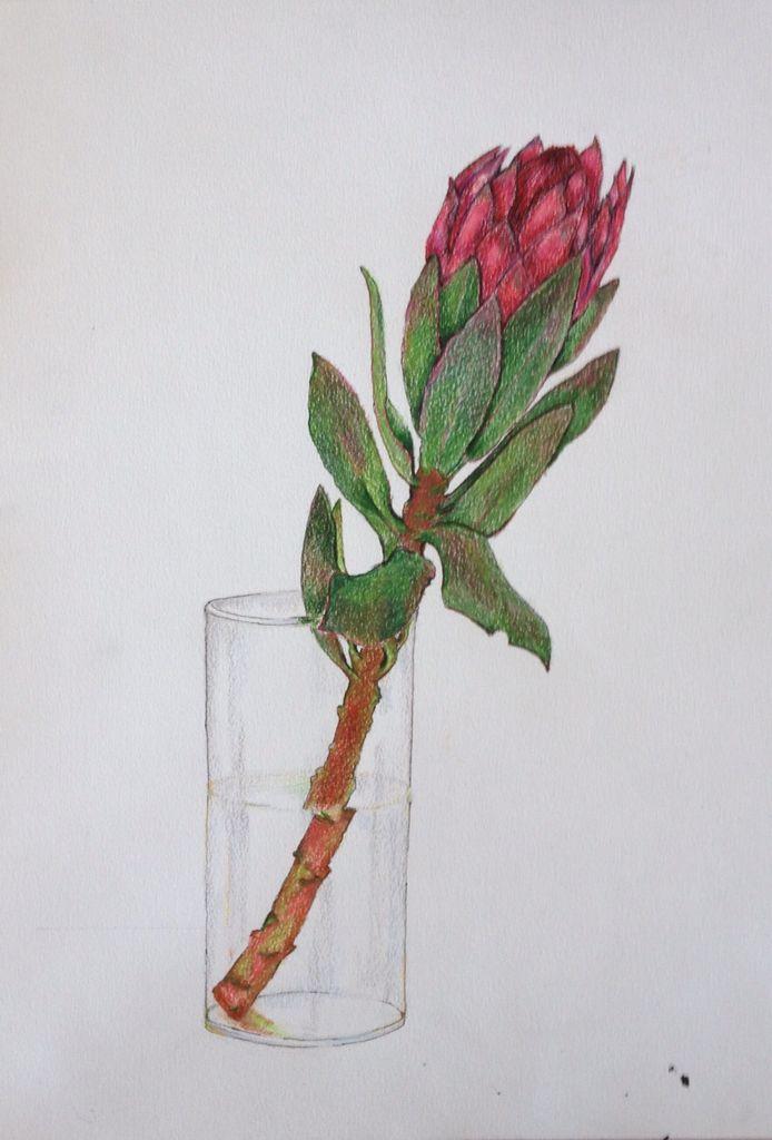Protea in a vase Prismacolor premier coloured pencils A3