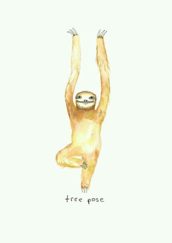 Yoga Sloth ♡