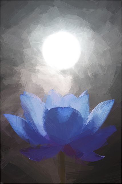 Blue Lotus Flower Oil Paintings / Lotus flower oil Painting / Photographic images using Akvis Oil Paint Filter | by Bahman Farzad