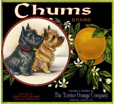 Marshall Canyon Chums Cairn Scottish Terrier Dog Orange Citrus Crate Label Art Print