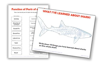 Handouts for teachers - Shark Research Institute