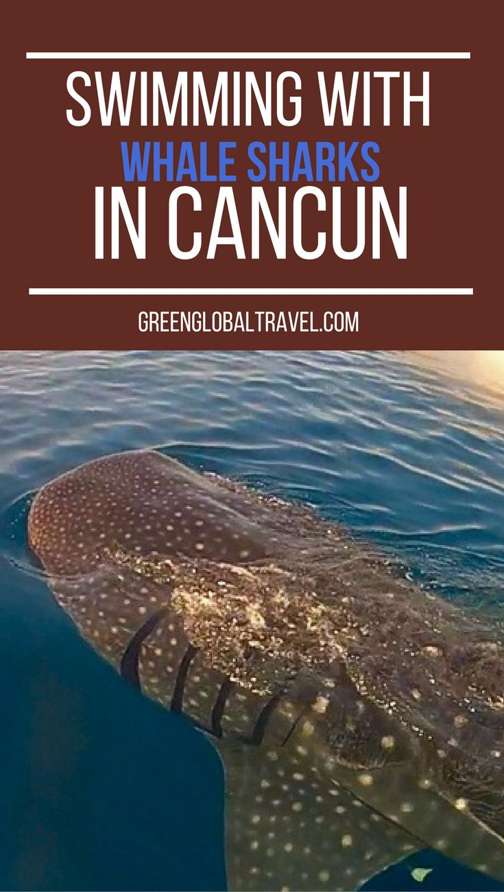 Read about our trip to Cancun to swim with Whale Sharks (there's even a video!). | Mexico | Yucatan Peninsula |