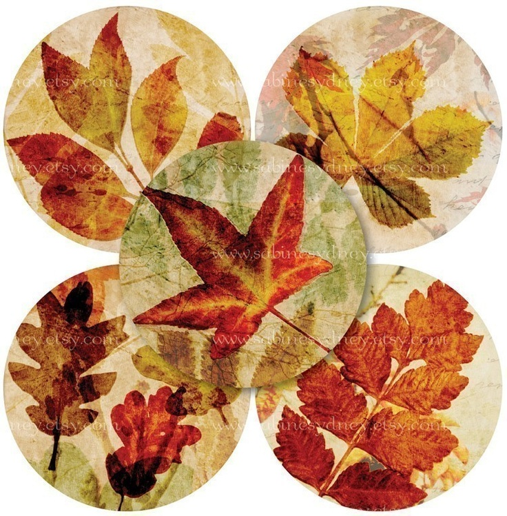 Autumn Leaf Collagesi would like to learn how to do this.