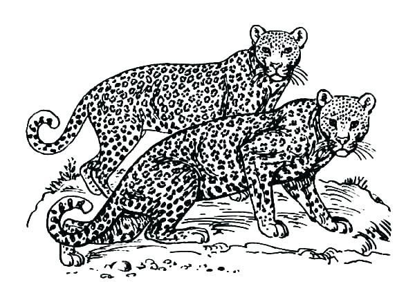 Jaguar Coloring Pages Free Collection Of Black Jaguar Coloring Pages