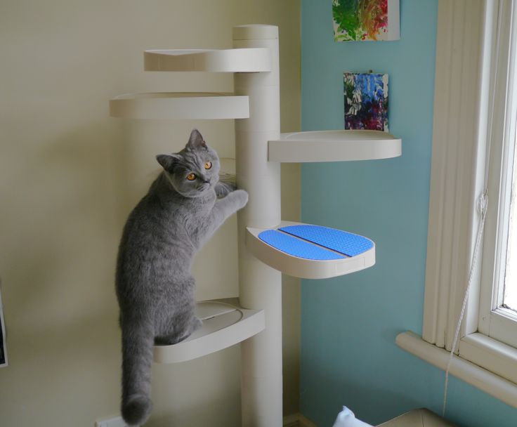 Smudge on our Monkee Tree Scalable Cat Ladder.  used as a gym,  inside the home.