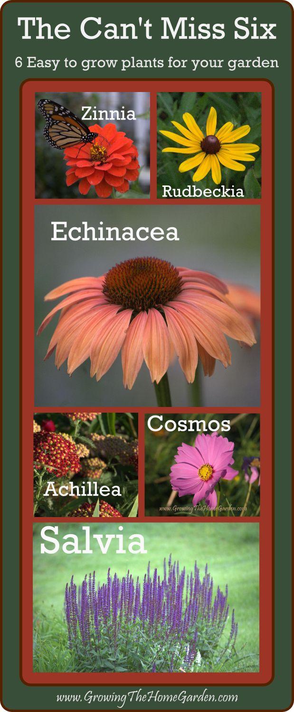 Six Easy to Grow Flowering Plants: Achillea, Echinacea, Cosmos, Rudbeckia, Salvia, Zinnia