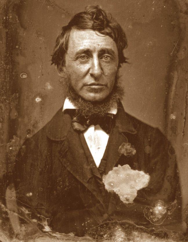 Henry David Thoreau • Andai nei boschi per vivere con saggezza, vivere con profondità e succhiare tutto il midollo della vita, per sbaragliare tutto ciò che non era vita e non scoprire, in punto di morte, che non ero vissuto.