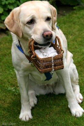 Inspirações para usar animais estimação no casamento {gatos e cachorros casamento}
