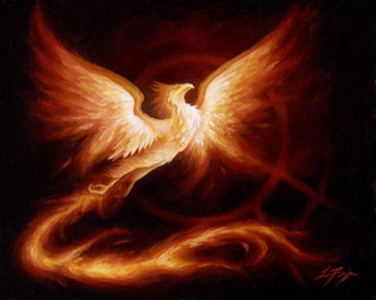 phoenix pin dessin tatouage phoenix tribal phenix tattoo. Black Bedroom Furniture Sets. Home Design Ideas