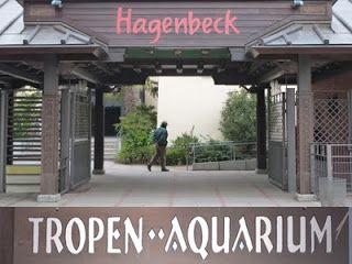 Tropen Aquarium im Tierpark Hagenbeck Hamburg - http://www.hamburg-fotos-bilder.de/2013/11/tierpark-hagenbeck-tropen-aquarium.html